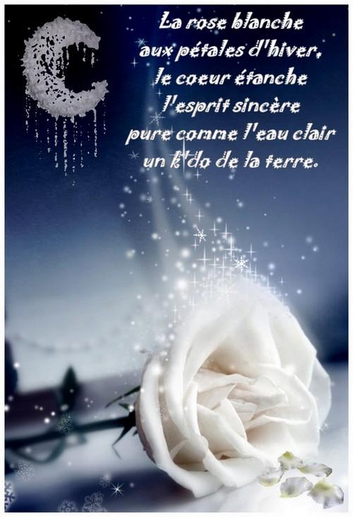 "✿ܓ✿  ""La rose blanche"" ✿ܓ✿"