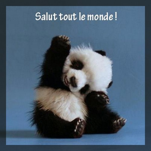   &quot;Salut!!&quot;  